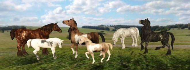 oYo Horses