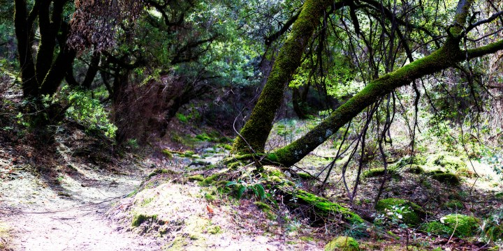 Exploring Whiskeytown: Brandy Creek Trail