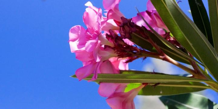 Exploring Whiskeytown: Shasta Divide Nature Trail