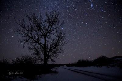 Sirius Tree