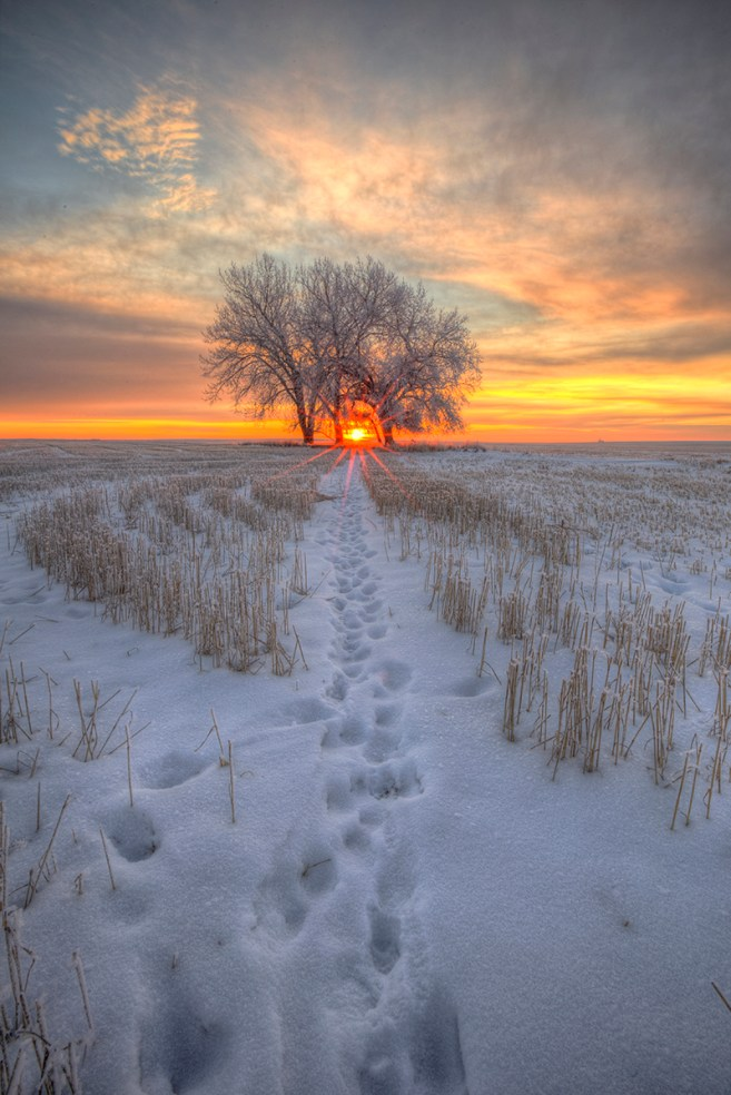 Sunset tree winter saskatchewan ryan wunsch