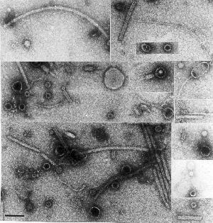 Viromics