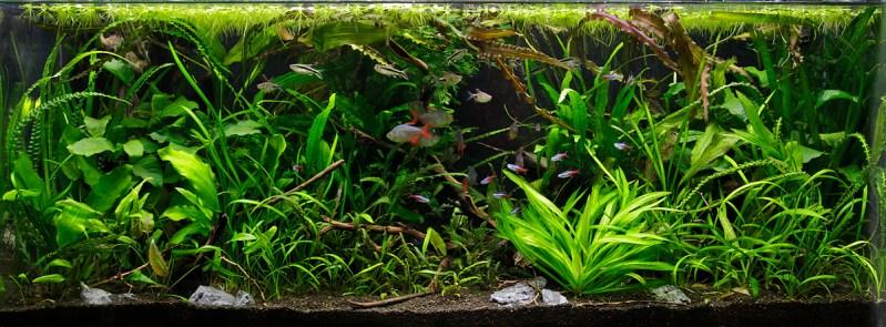 jungle akvarium