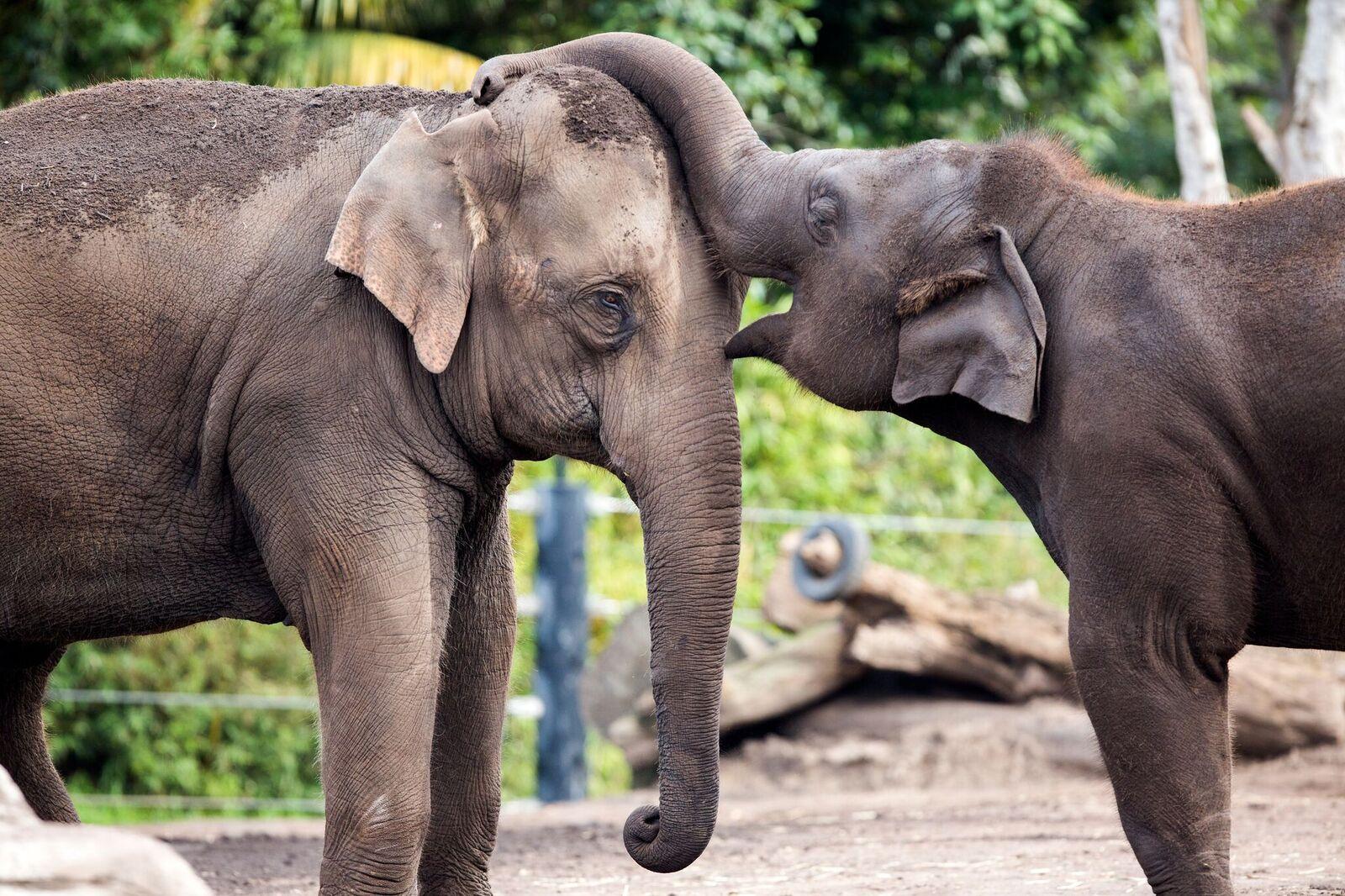 Taronga Zoo Annual Pass GIVEAWAY!