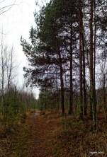 12-SAM_5933_wolomin