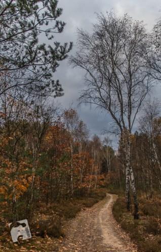 grabicz-jesienia-5097