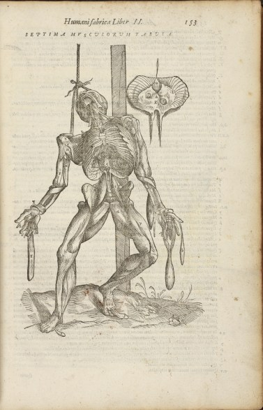 Andreas Vesalius, Anatomia (Venice, 1604), p. 153. Pre-1701 Medical Printed Collection, 2498.