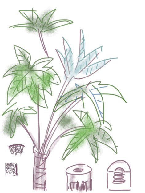 Figure 1. Drawings of the Tetrapanax papyrifer