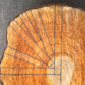 Radial divisions of a log cross-section