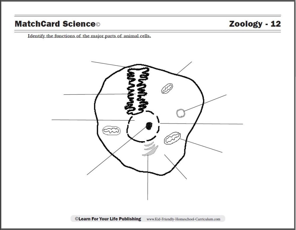 medium resolution of 5th Grade Worksheets Wild Animal   Printable Worksheets and Activities for  Teachers