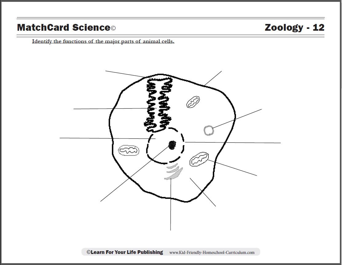 hight resolution of 5th Grade Worksheets Wild Animal   Printable Worksheets and Activities for  Teachers
