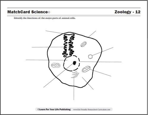 small resolution of 5th Grade Worksheets Wild Animal   Printable Worksheets and Activities for  Teachers
