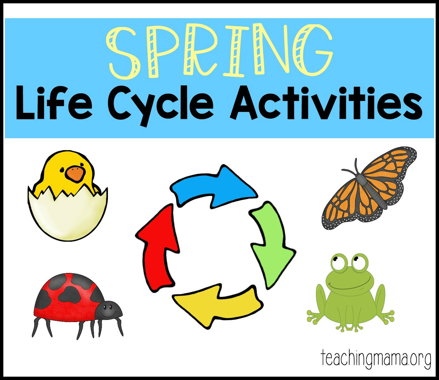 30 Life Cycles Of Animals Worksheets