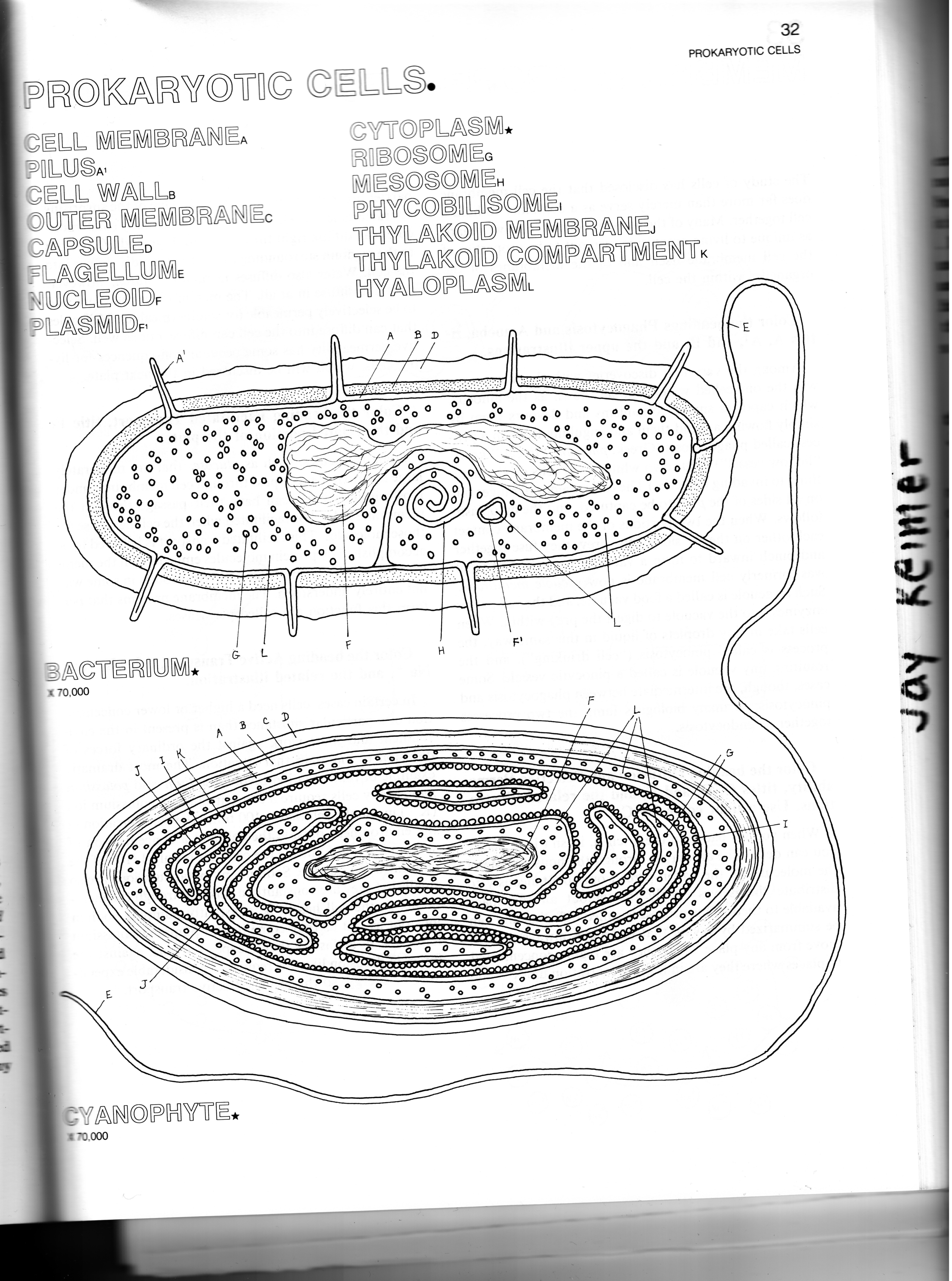 31 Prokaryote Coloring And Worksheet Answers