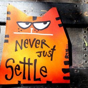 cat magnet never settle