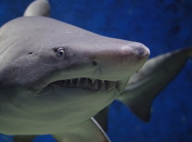 fear of sharks giving up fear