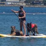 Living in the moment: Habit learned from dogs