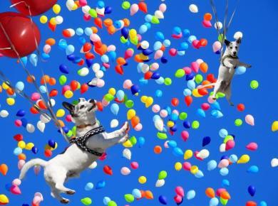 balloon dogs positive mindset rynski recovery