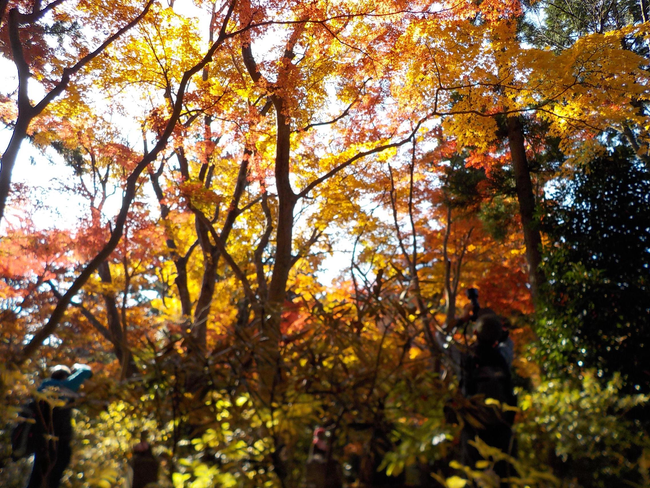 高尾山の紅葉 | 私のページ(りょうちゃん)