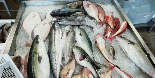 お魚のコーナー