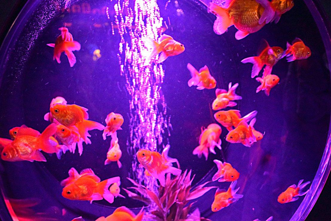 art exhibition Tokyo; art aquarium 1