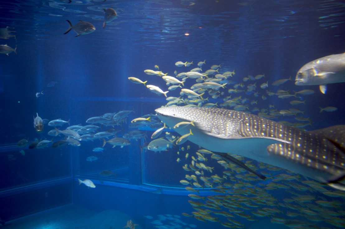 Things to do in Osaka - visit the award winning aquarium