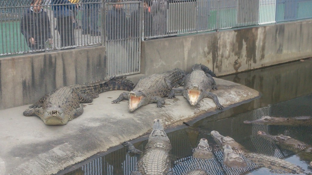 Oniyama Jigoku – Like the Yama Jigoku, this muggy hell doesn't have a whole lot going on so it has now been made home to a large number of crocodiles, as apparently, these are perfect breeding conditions for them.
