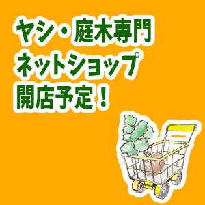 ヤシ・庭木専門ネットショップ開店予定!