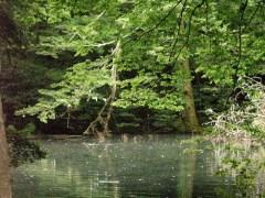 6月27日の不知沼の池