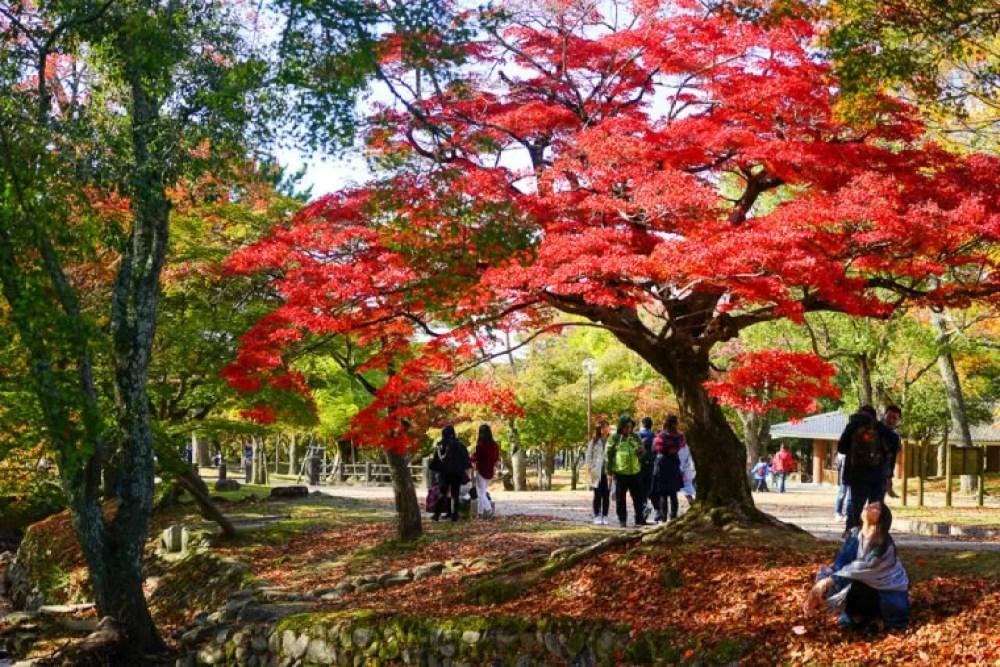 奈良公園と東大寺の紅葉