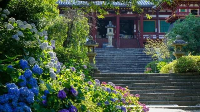 奈良のあじさい寺「矢田寺」