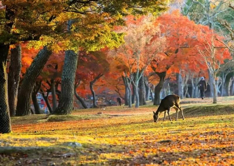 奈良のおすすめ紅葉スポット「奈良公園」