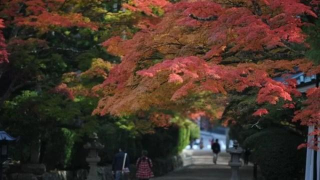 関西・和歌山のおすすめ紅葉スポット「高野山」|蛇腹道