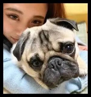 田辺莉咲子,フィットネストレーナー,テラスハウス,かわいい,愛犬,雷太