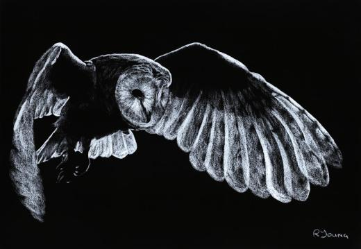Wildlife Fine Art Gallery. Barn Owl. A raptor pastel produced in cooperation with Miguel Lasa.