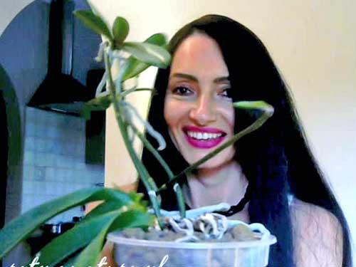 Rozmnażanie storczyków z keiki – pokażę Ci jak zostać w tym mistrzem!