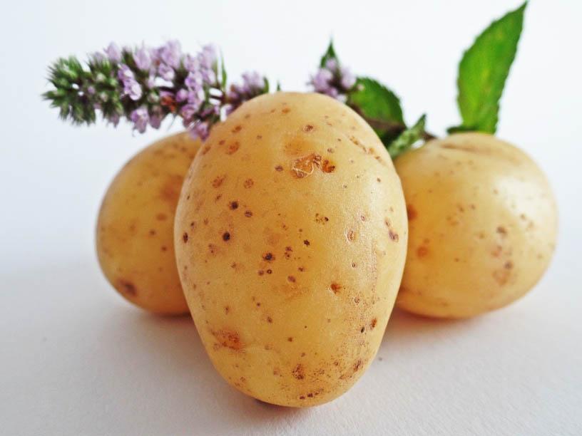 Ukochany ziemniak i jak z nim postępować aby nie chorować!
