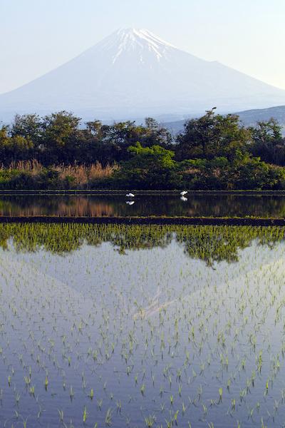 Paddy fields in shizuoka