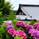 花に囲まれた寺「勝名寺(しょうみょうじ)」で20種・1500株のあじさいを撮りに行ってきた。