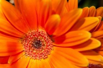 Macys_Flower_Show-8