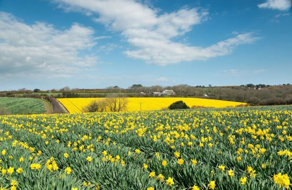 Cornwall in Spring