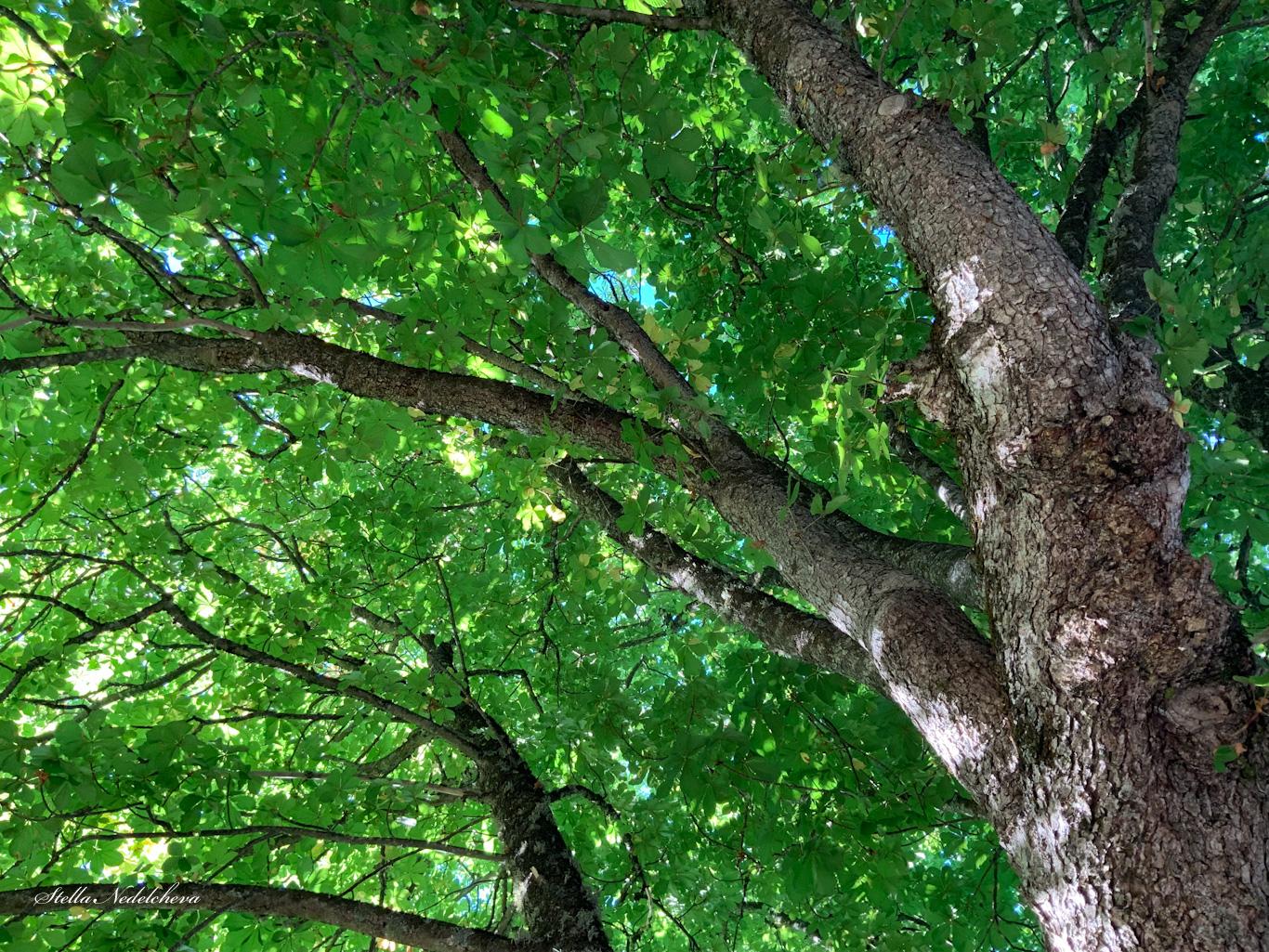 Sous la couronne d'un grand arbre