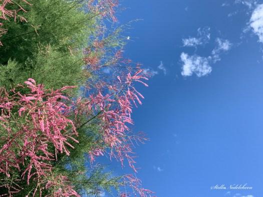 Fleurs roses sur le fond du ciel bleu