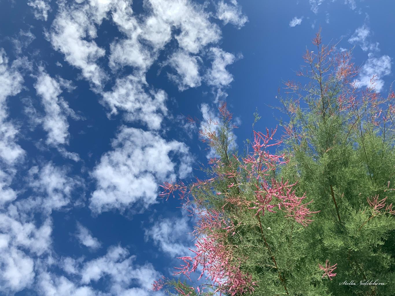 Arbuste fleuri sur le fond d'un ciel avec quelques nuages