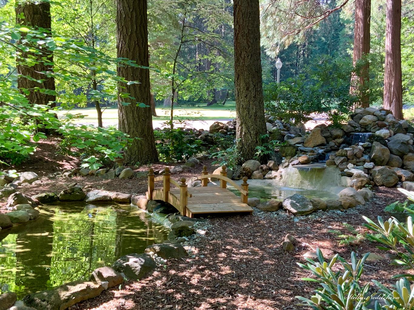 Petit pont en bois dans un jardin zen