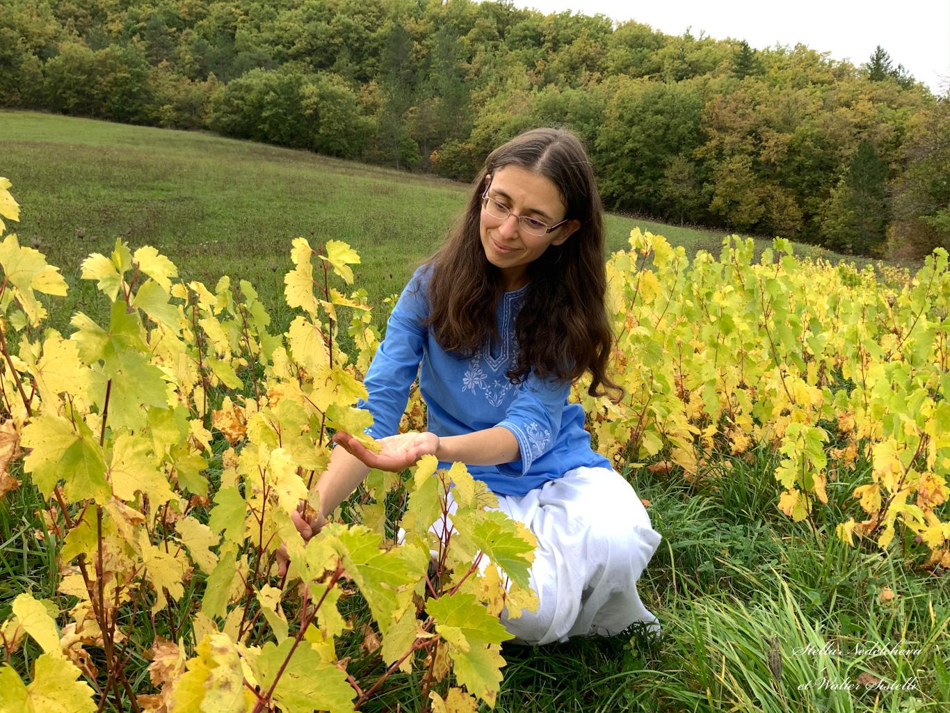 Jeune femme contemplant des feuilles de vignes en automne