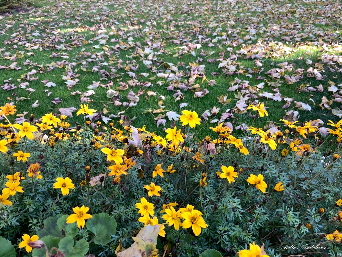 Fleurs jaunes et feuilles d'automne