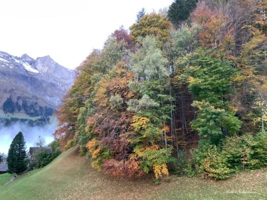 Forêt dans les Alpes en automne