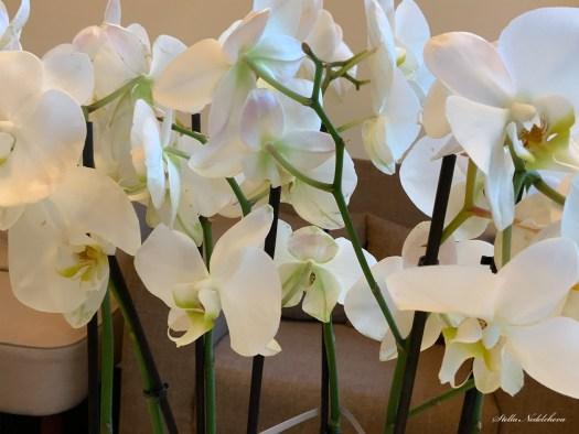 Bouquet d'orchidées blanches