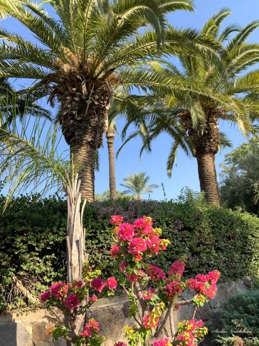 Palmiers et fleurs exotiques